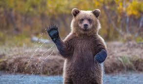 histoire drole ours bleu