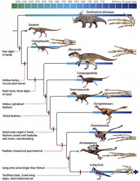 La r volution qui a men des dinosaures aux oiseaux mati re et r volution - Liste de dinosaures ...